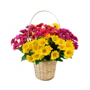БУКЕТЧЕ 10цветчета МАРГАРИТКИ 30см